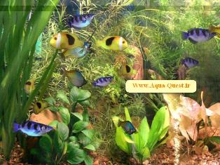 Aqua 3d Screen Saver