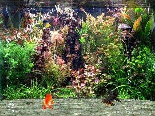 Fantastic Fish Screen Saver V2.5
