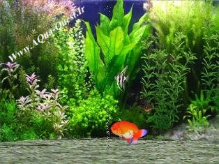 Fantastic Fish Screen Saver V1.0