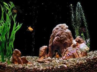 GoldfishAquarium-V2