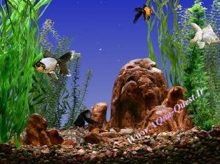 Goldfish Aquarium v0.9