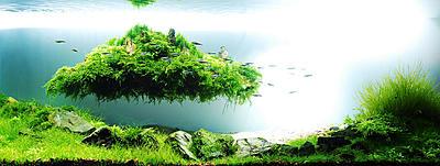 aquarium-architecture-takashi-amano-061.jpg