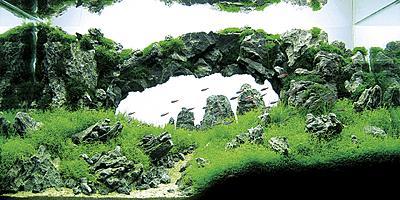 superior-takashi-amano-aquascaping-3-aquarium-aquascape-design-ideas-1440-x-719.jpg