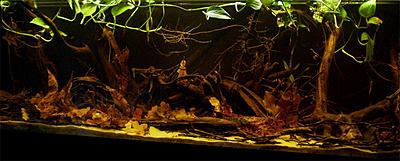 biotope-aquarium-c2013_45-1.jpg