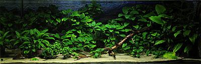 biotope-aquarium-c2013_65-1.jpg