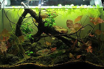 biotope-aquarium-c2013_99-1.jpg