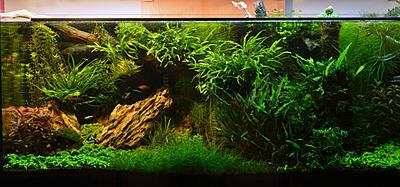 biotope-aquarium-c2013_19-1.jpg