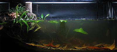 biotope-aquarium-c2013_30-1.jpg