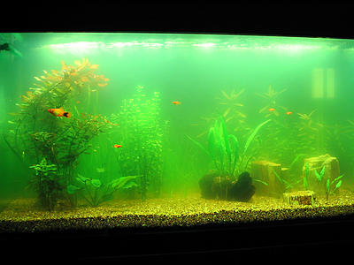 green-aquarium-water.jpg