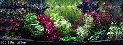 2016enter.aquatic-gardeners.org.jpg
