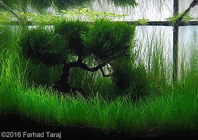 2016 2enter.aquatic-gardeners.org.jpg
