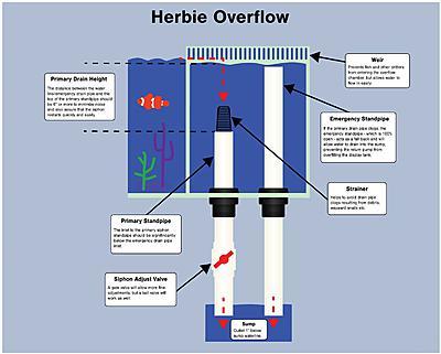 herbie-1.jpg