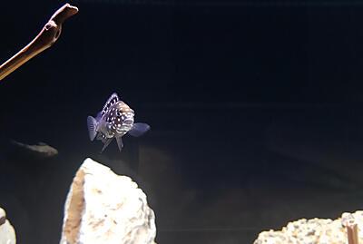 davfish  (44).jpg