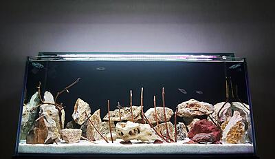 davfish  (1).jpg