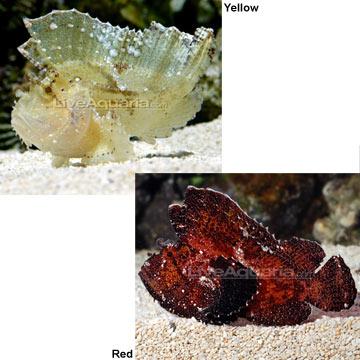 p-76970-leaf-fish.jpg