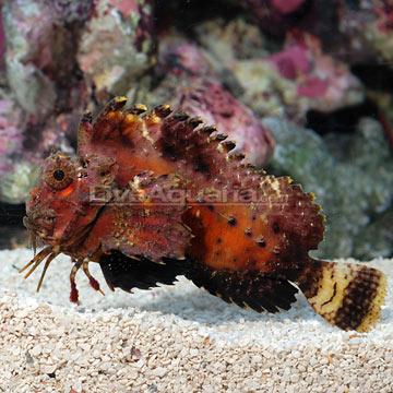 p-39864-stingfish.jpg