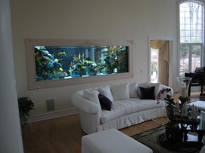 1000-gallon-wall-aquarium.jpg