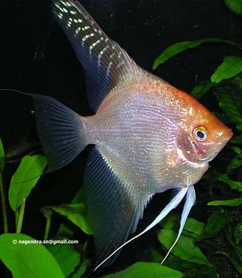 fish-3226.jpg