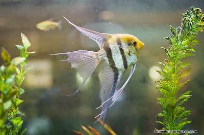 freshwater-angelfish-biodome_850_watermark-text.jpg
