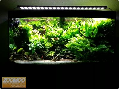 7601_7_aquarium_led_beleuchtung.jpg
