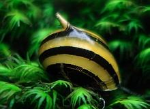 invertebrates_spiky_snail.jpg