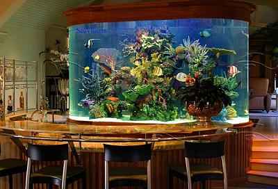 custom-aquariums-fish-tanks-1.jpg