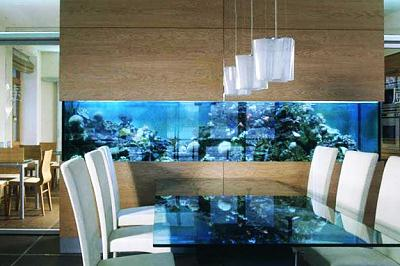 custom-aquariums-fish-tanks-5.jpg
