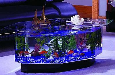 custom-aquariums-fish-tanks-7.jpg