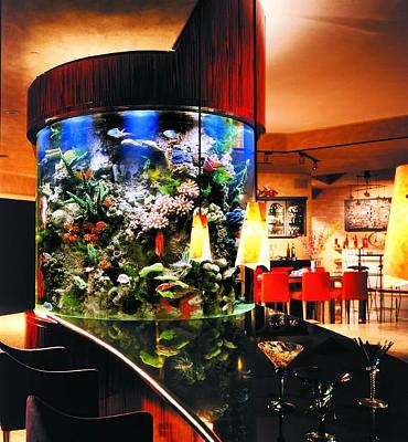 custom-aquariums-fish-tanks-13.jpg