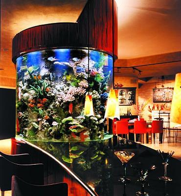 custom-aquariums-fish-tanks-13.jpg