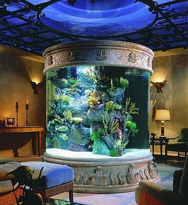 custom-aquariums-fish-tanks-14.jpg