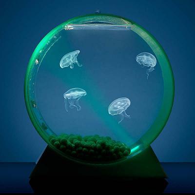desktop-jellyfish-tank.jpg