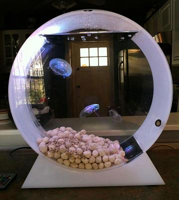 desktop-jellyfish-tank-2.jpg