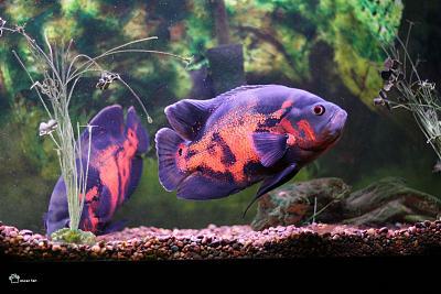 oscar_fish.jpg