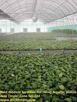 aquatic plants 1.jpg