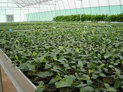 aquatic plants 2.jpg