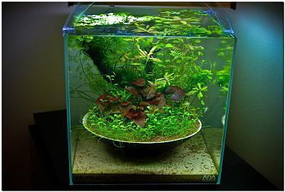 1_ikebana_aquascape.jpg