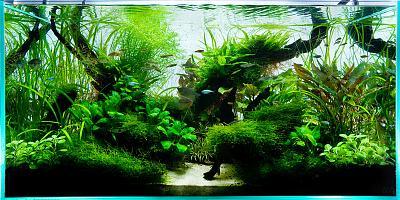 47_1aquarium_ada_plantedtank.jpg