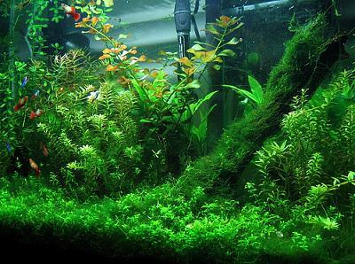 aquariumplant.jpg