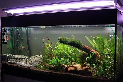 aquarium-plant-lighting.jpg
