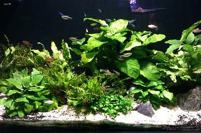 aquarium-plants-aquarium-decor-1024x682.jpg