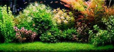 aquascape front page sample layout(1)_8444_image020.jpg