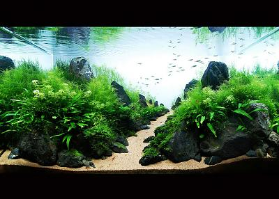 aquascaping-aquarium.jpg