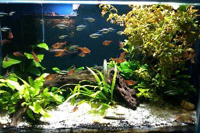 aquatic-plants-aquarium-decorations-1024x682.jpg