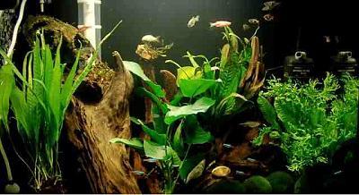 live-aquarium-plants-fish-tanks.jpg