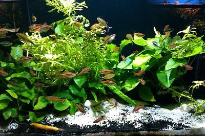live-plants-fish-tank-decorations-1024x682.jpg
