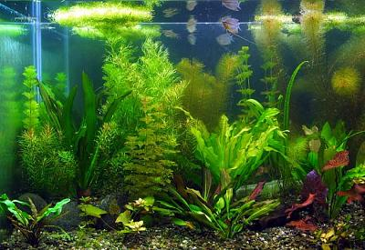 propagarea-plantelor-de-acvariu.jpg