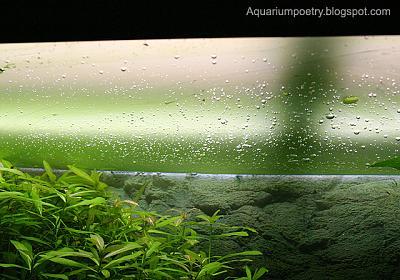 algaeslime 007.jpg