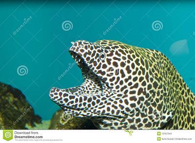 tessalata-eel-aquarium-13167344.jpg