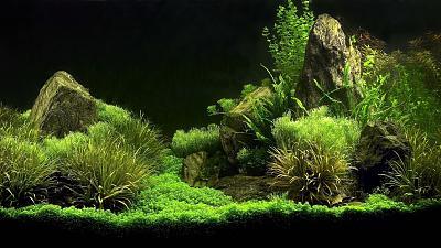 3d-abstract_hdwallpaper_beautiful-aquarium_43889.jpg